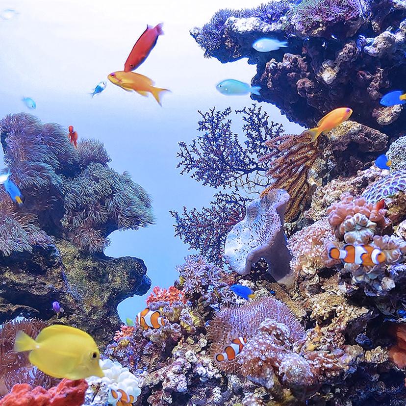 医療機関インテリア熱帯魚・水槽のレンタル・メンテナンス:レミニセンス